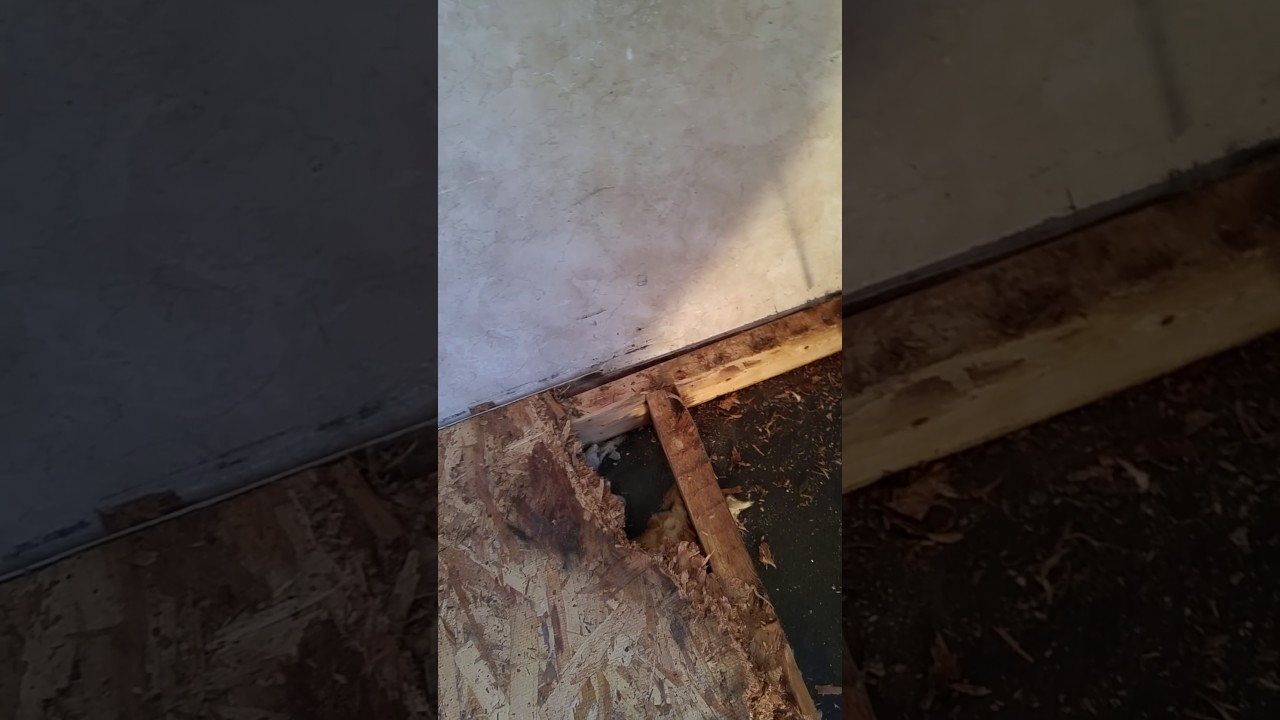 Rv Travel Trailer Floor Repair Part 3a Youtube