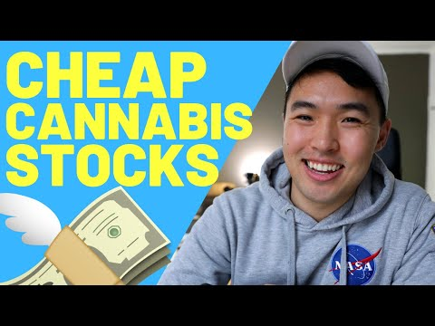 Should you Invest in Marijuana Stocks - BEST Cannabis Stocks