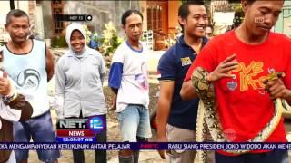Warga Tangkap Ular Sanca di Plafon Kamar Mandi - NET12