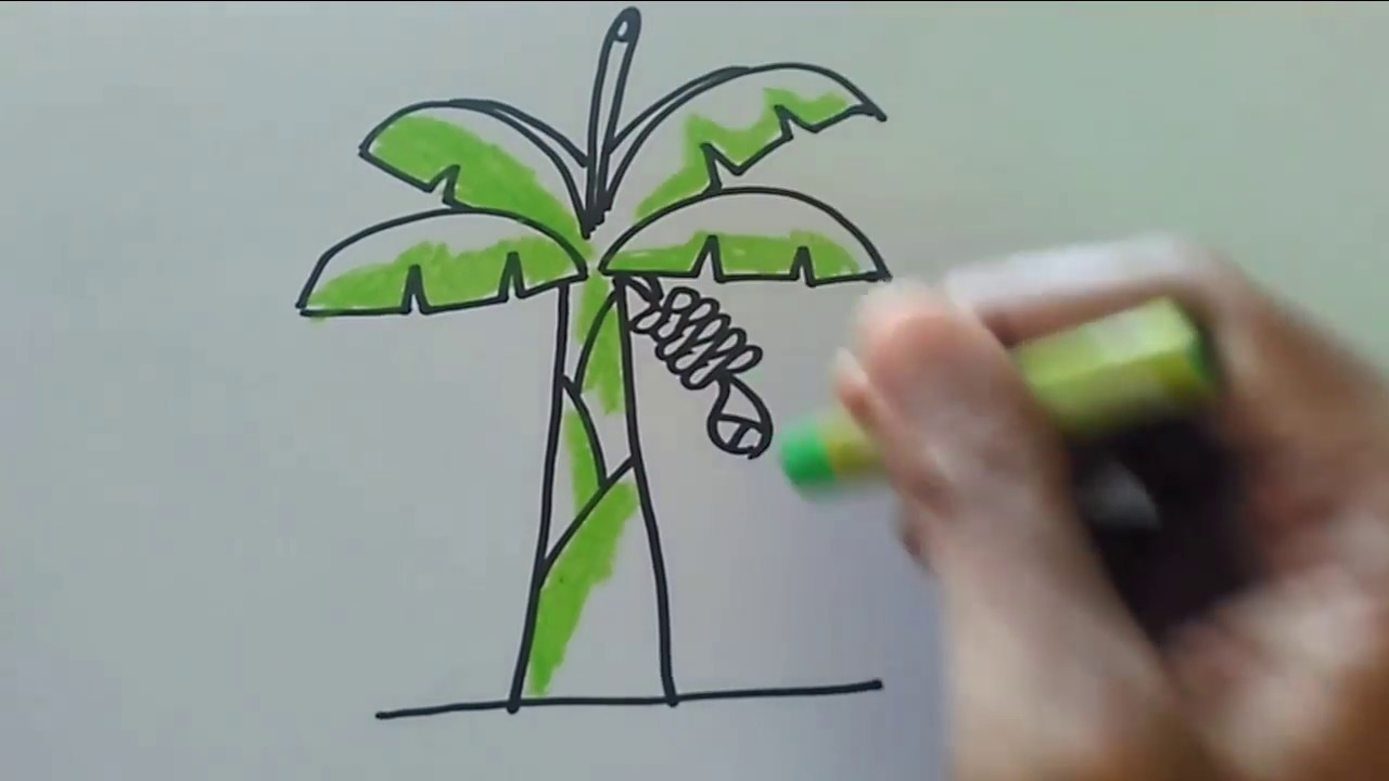 Cara menggambar pohon pisang sederhana - YouTube