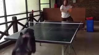 Monkey plays Ping Pong!