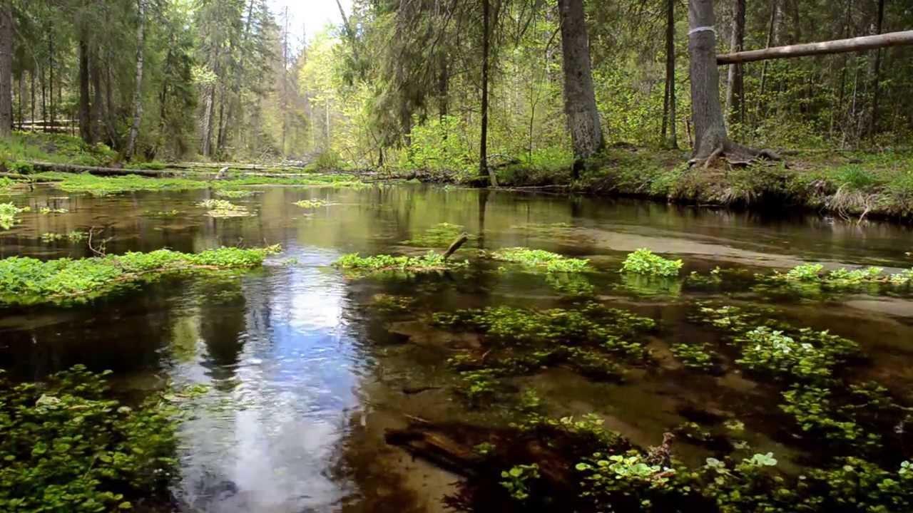 Картинки природы и звуки природы