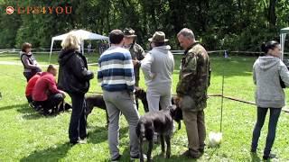 31я выставка охотничьих собак в Харьковской области ФМСУ