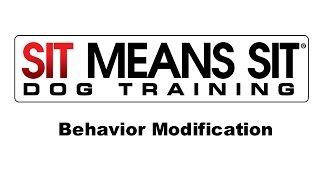 Sit Means Sit Dog Training -  Behavioral Modification