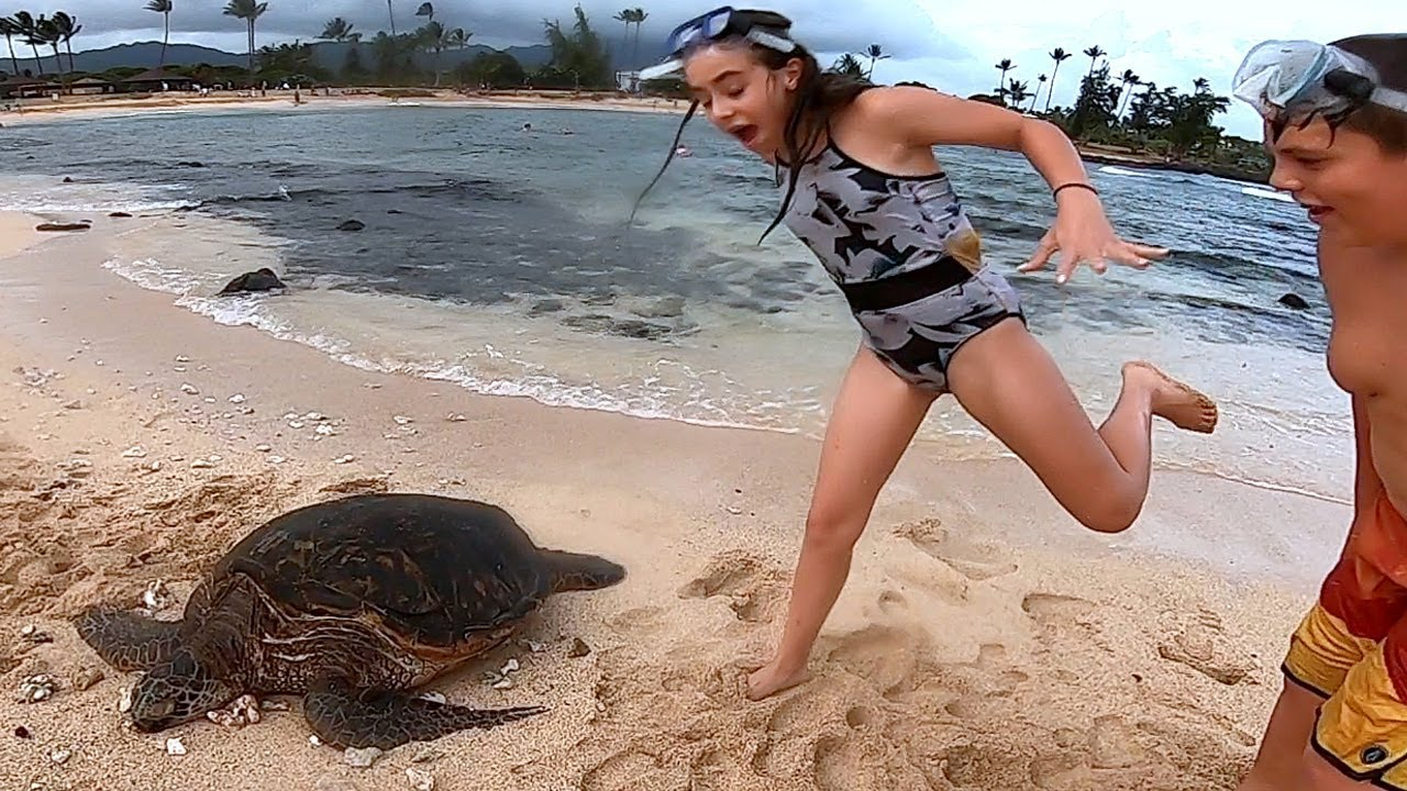 sand-turtle-scare