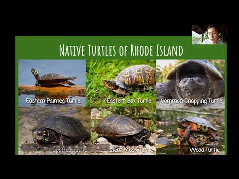 turtle-power---virtual-program