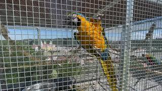 """Papugi na """"wolności"""" tzn. w wolierze ogrodowej."""