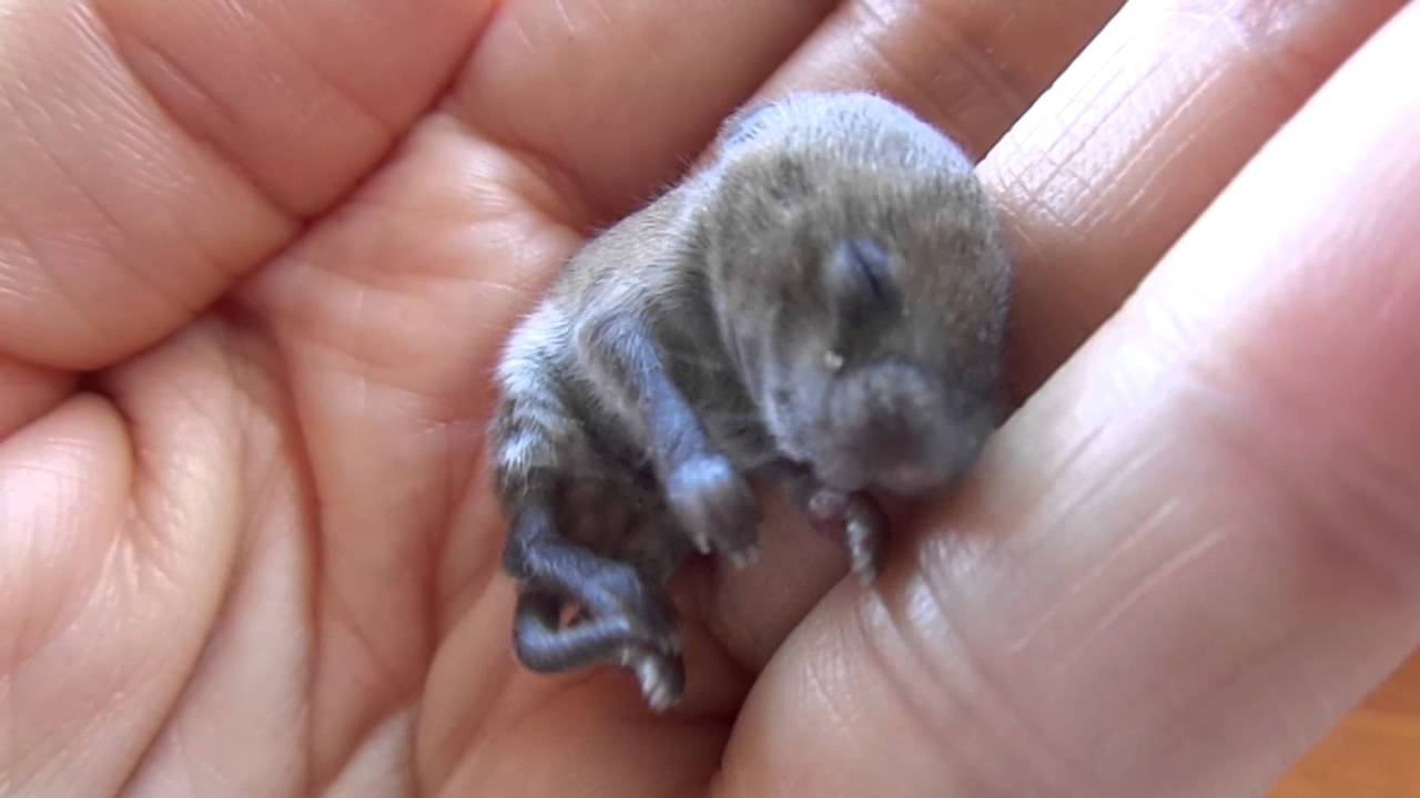 Image Gallery newborn mice