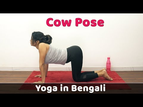 Cat Cow Pose Yoga Asana | Yoga For Weight Loss | Bangla Yoga Video | B…