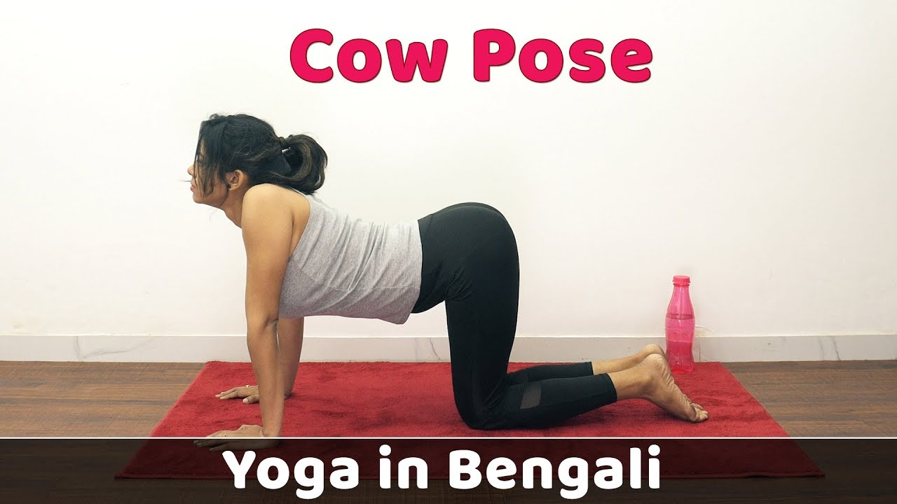 Cat Cow Pose Weight Loss