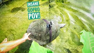 we-strapped-a-gopro-on-a-huge-river-terrapin-rare-turtle
