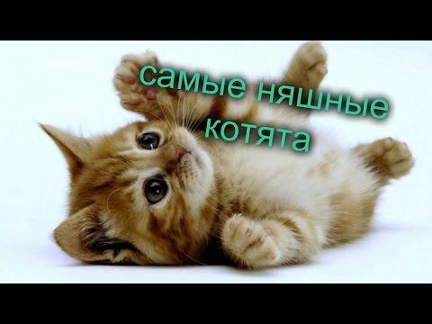 Котики самые няшные котята - YouTube