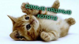 Котики  самые няшные котята