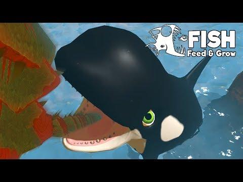 วาฬเพชฌฆาต!! สปีชี่ส์ที่ใหญ่ที่สุด!! | Fish Feed and Grow #38
