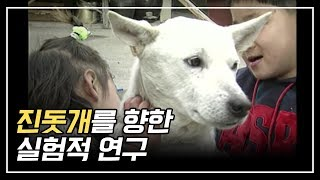 우리나라 혈통 진돗개를 향한 실험적연구 / An Experimental Study on the Jindo Dogs of Korean descent