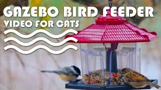 Entertainment Video For Cats. Gazebo Bird Feeder. Sparrow, Black-capped Chickadee, And Squirrel.