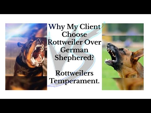 Rottweilers Temperament ? | Things you should know about rottweilers ? | 7275863266, 9140752208 😈