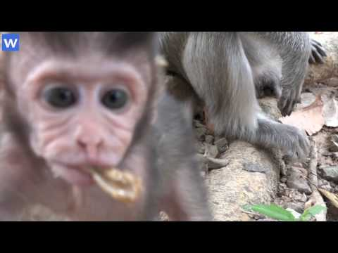Amazing baby monkeys - 1 hour about baby monkeys - Amazing animals
