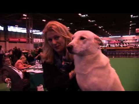 DFS Crufts 2010 Best of Breed Canaan Dog