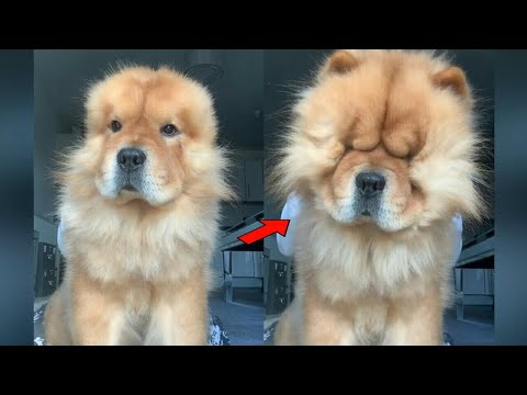 Baby Dogs ( Puppy ) – Cute and Funny Dog ( Puppy ) Videos 2020 Collection #8 || Lovely Sphere