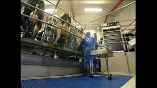 видео молочное оборудование