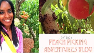 Peach Picking Adventures VLOG