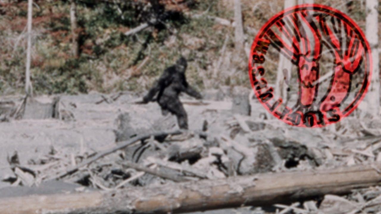 Bigfoot Encounter Caught On Tape 2015 - YouTube