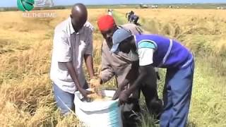 Mwea Rice Farmers Adapt Mechanized Harvesting
