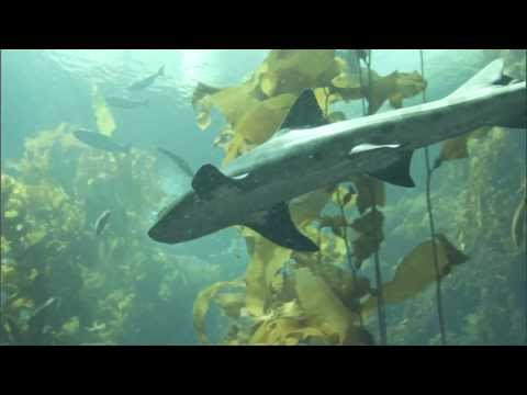 'Symphony Of Sharks' By NOAA Fisheries Service
