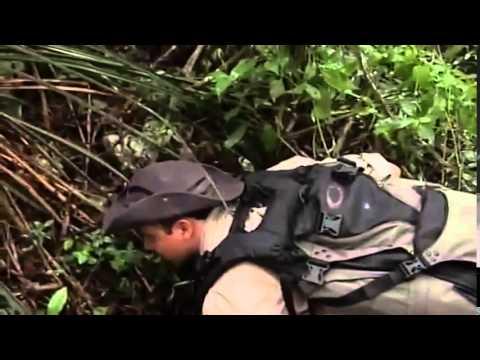 BCT La cueva de las serpientes colgantes