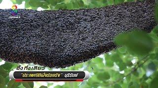 Repeat youtube video อึ้ง!!! ประเพณีตีรังผึ้ง