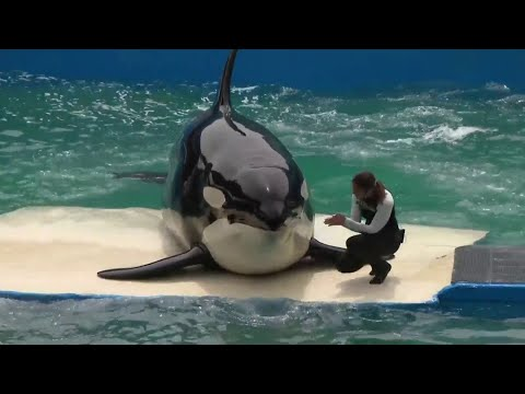 Miami Seaquarium Not Wavering In Stance On Lolita's Release Despite Pushback From Lummi Tribe