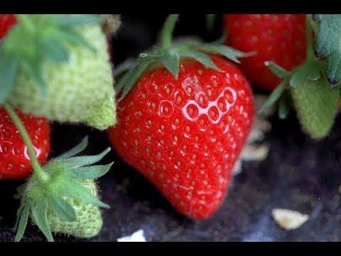 Résumé de La fraise, un parfum de business, sur France 5, le 15 juin 2014
