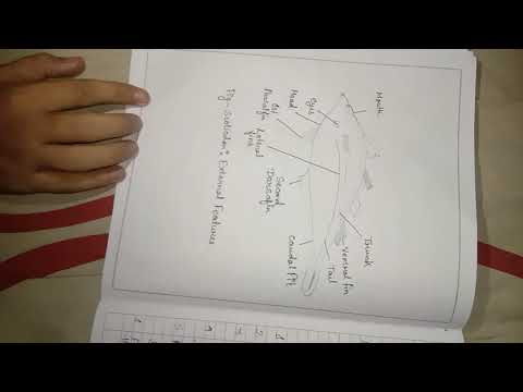 Zoology honours practical copy for bsc part 2