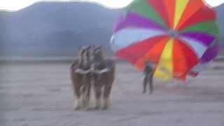 ParaSailing on Horses!