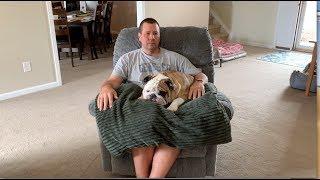 reuben-the-bulldog-through-his-eyes