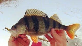 Рыбалка на щуку и окуня в феврале. Разведка на жерлицы. Ловля окуня зимой. Щука. Густера.