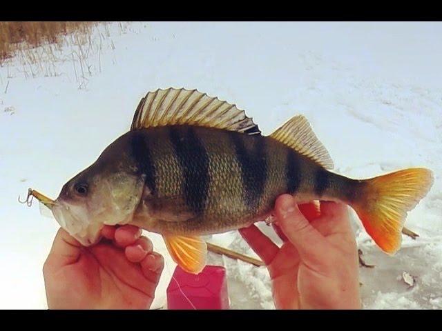рыбалка в феврале на балансир