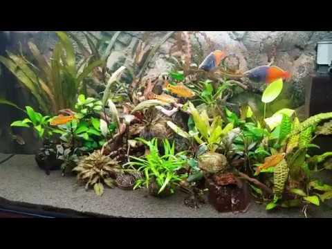 Рецепт ленивого аквариума (результат 9 месяцев после запуска)