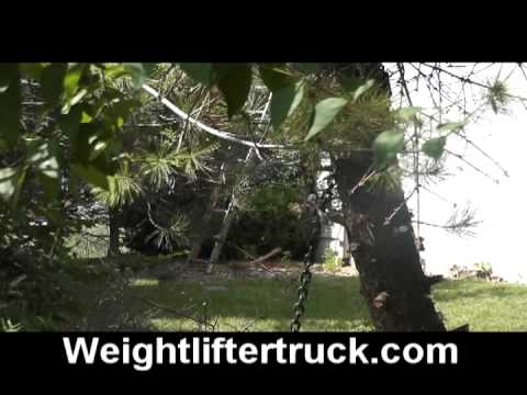 How To Remove A Dead Tree By Yourself