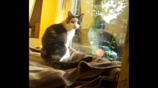 Meine Katze Myu ist tot - Ein Abschiedsfilm