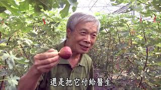 【農夫與他的田】20181123 - 李爺爺的無花果