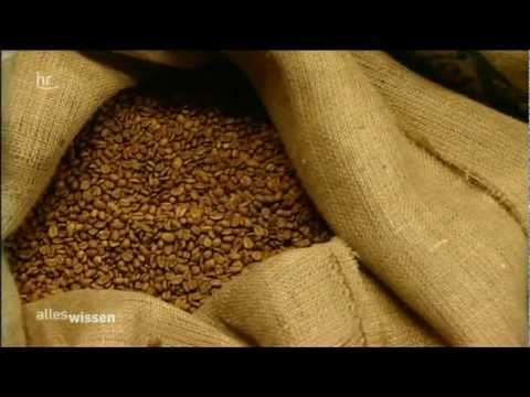 Filterkaffee vs. Pads vs. Kapseln - Ökologie und Geschmack (hr Alles Wissen)