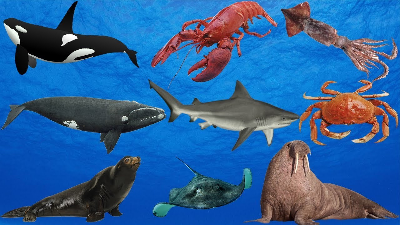sea ocean animals creatures english learn