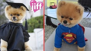 JiffPom From Puppy To Senior_Cartoon Discoveries