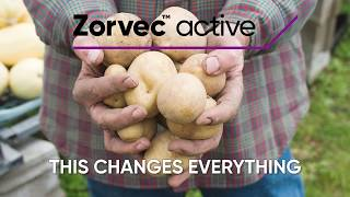 Zorvec Active in fights one of the most destructive diseases in potatoes