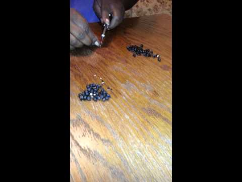 Easiest Way to Nip Four O'Clock Seeds Before Plant