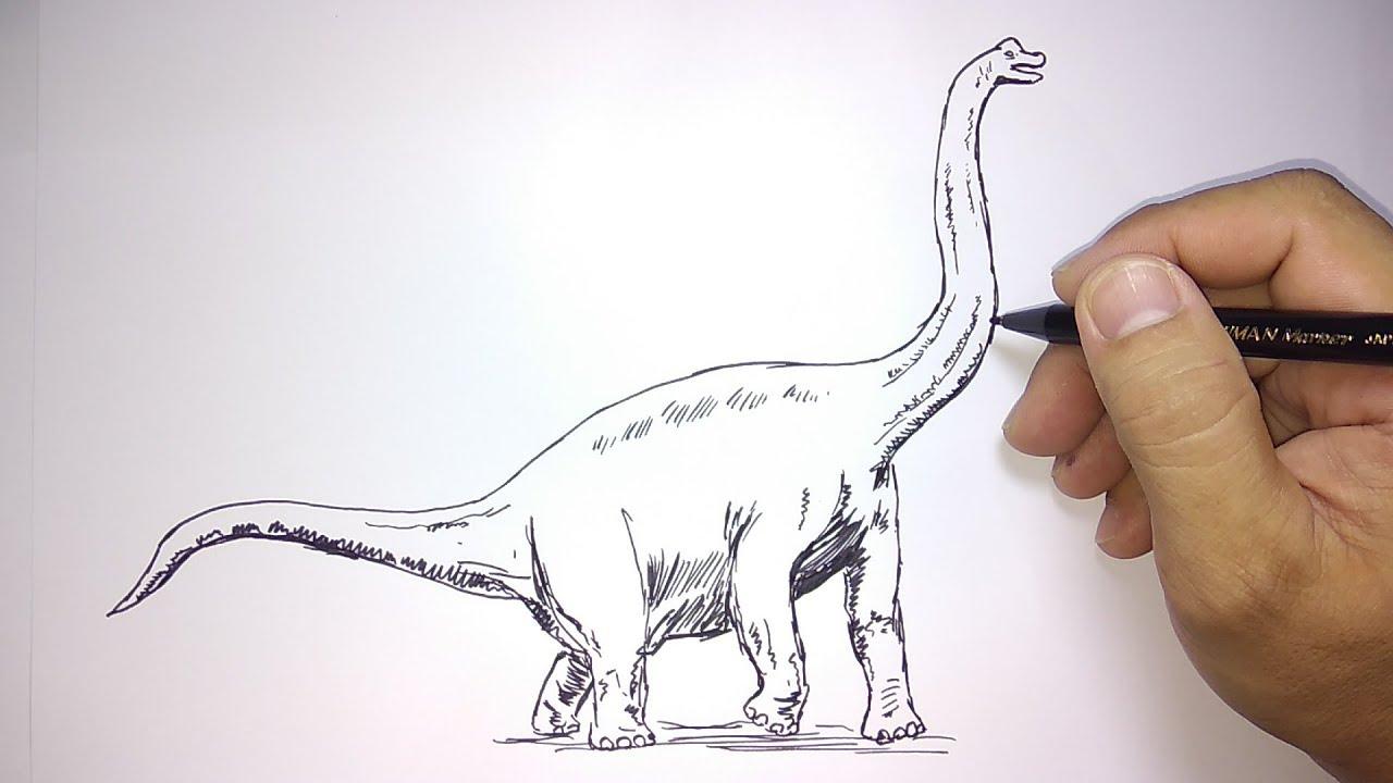Cara Menggambar Dinosaurus Branchosaurus Youtube