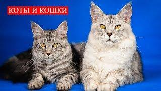 Коты и Кошки   Существа с уникальными, сверхъестественными способностями