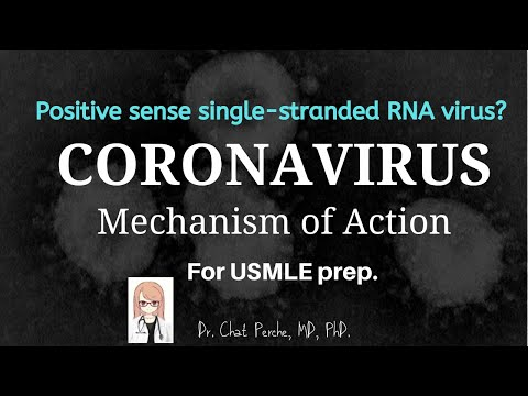 Coronavirus Mechanism Of Action For USMLE Prep. 【USMLE/Microbiology】